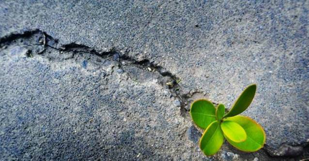RESILIENCE: PART THREE