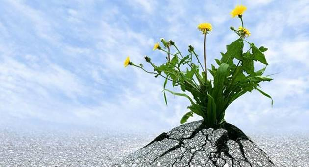 RESILIENCE: PART TWO